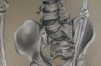 skeleton pelvis