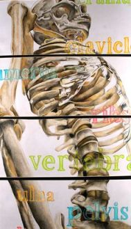 skeleton perspective with words