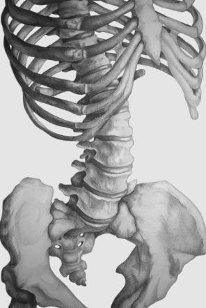 skeleton torso zoom