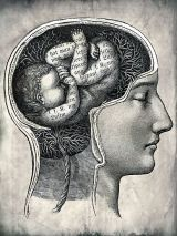 brain womb
