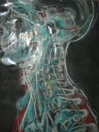 inside the neck