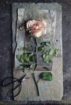 od cut rose