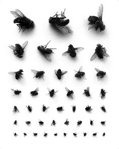 od flys