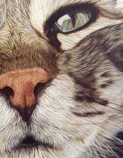close-up kitty kat