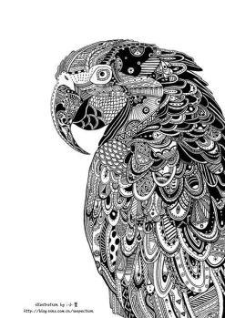 zentangle parrot