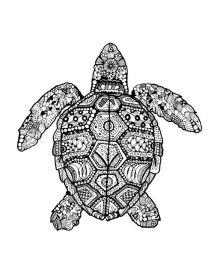 zentangle turtle