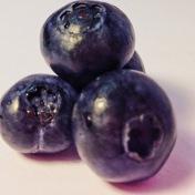 bluberries 3