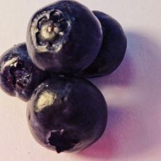 blueberries 4
