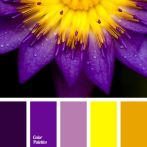 yellow + purple 1