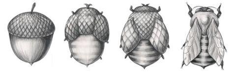 acorn to bee