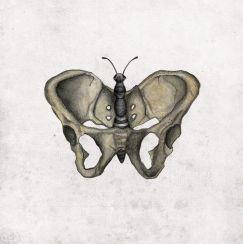 pelvis + butterfly