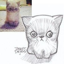 kitty kitty robert de jesus