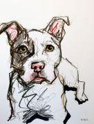 pet cartoon portrait