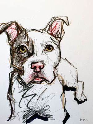 pet cartoon portrait