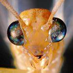 eye - ant 1