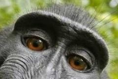 eye - ape 2