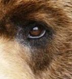 eye - bear 2