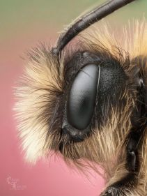 eye - bee