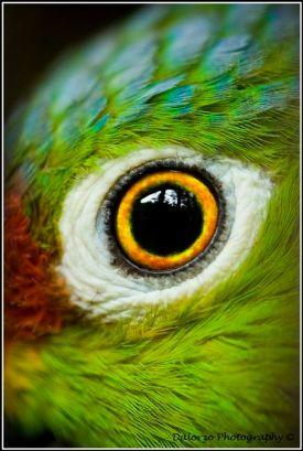 eye - bird 1