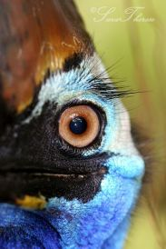 eye - bird 2
