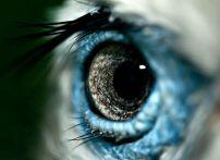 eye - bird 3