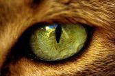 eye - cat 2