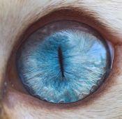 eye - cat 3