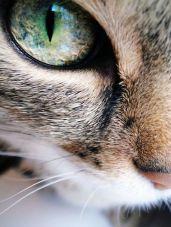 eye - cat 4