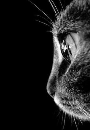 eye - cat 5