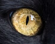 eye - cat