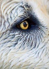 eye - dog 1