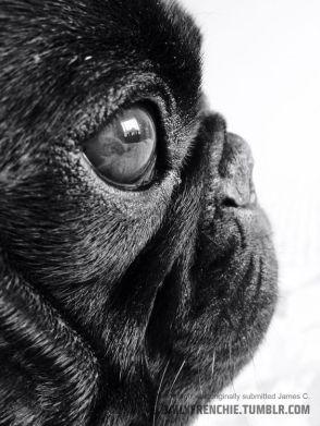 eye - dog 2