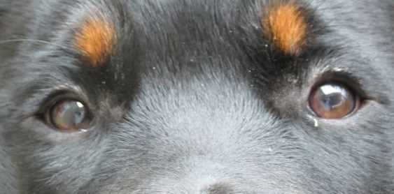 eye - dog 3