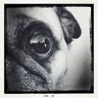 eye - dog 4