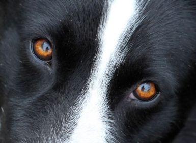 eye - dog 5