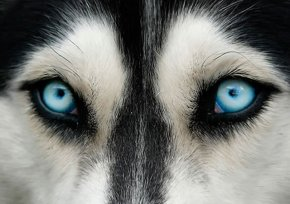 eye - dog 6