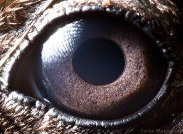 eye - duck