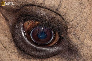 eye - elephant 1