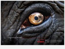 eye - elephant 3