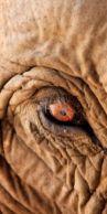 eye - elephant 4
