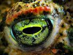 eye - frog 4
