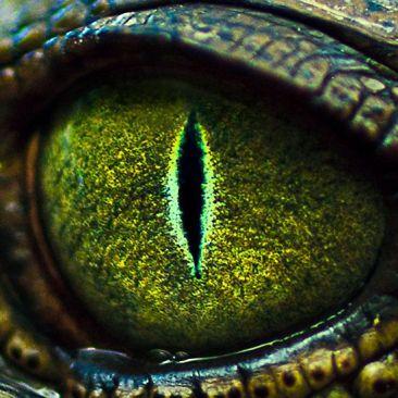 eye - green tree python