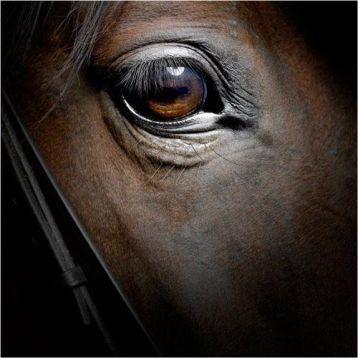eye - horse 2