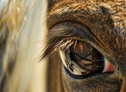 eye - horse 3