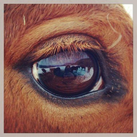eye - horse 4