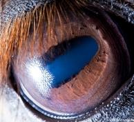 eye - horse