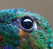 eye - hummingbird