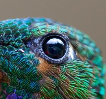 eye - hummingbird