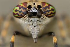 eye - insect 2