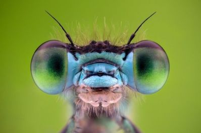 eye - insect 3